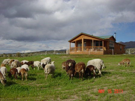 Home & Sheep